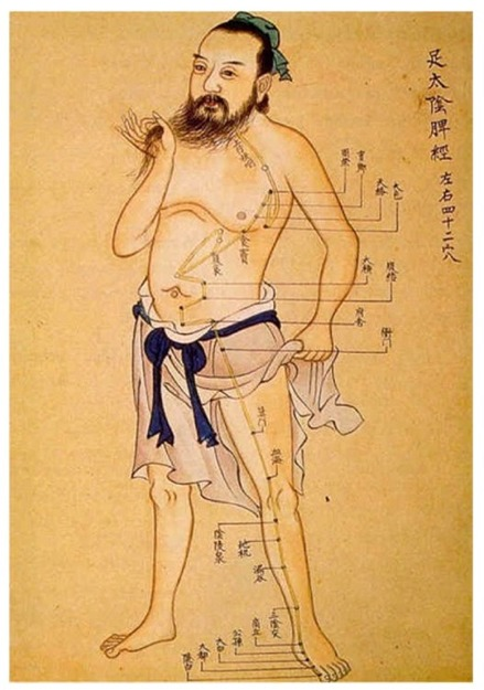 About Acupuncture. meridians